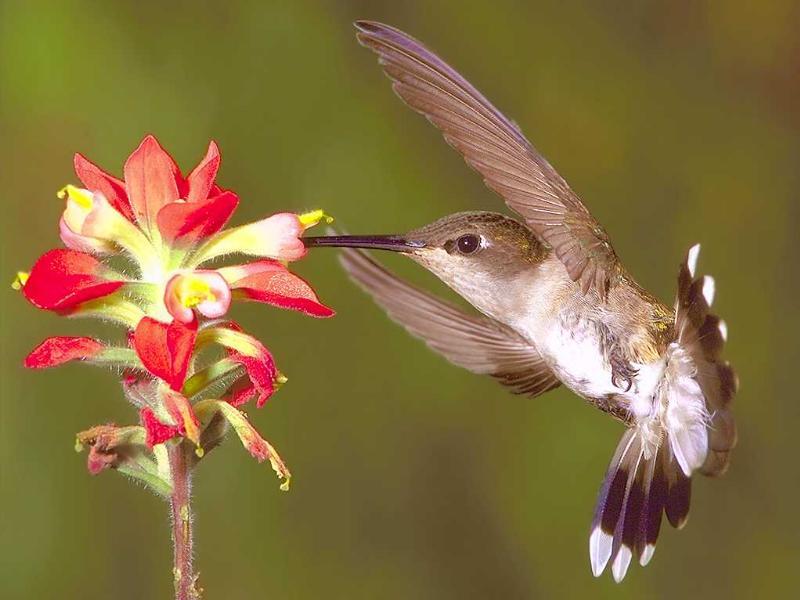 Vidéo : une histoire d'amour entre le pollen et les insectes
